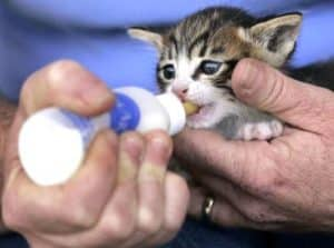 what to feed a kitten raising newborn kittens