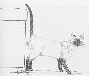 can a cat spray after being neutered
