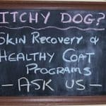 A veterinary guide to treating itchy skin in pets